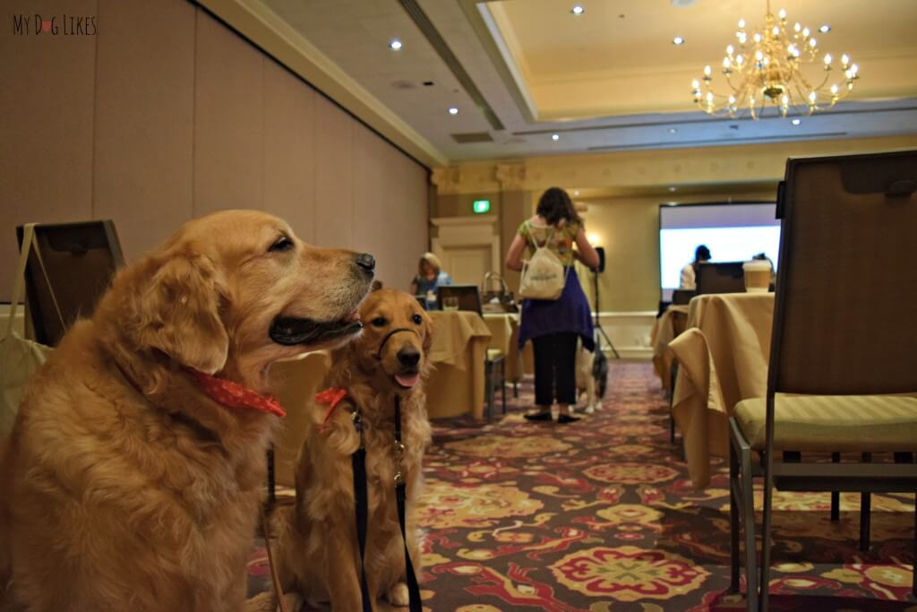 Harley and Charlie at last years BlogPaws conference