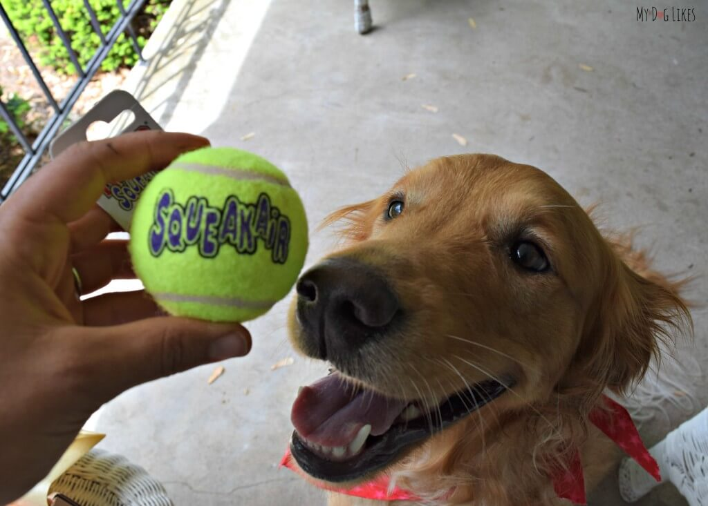Kong makes our favorite dog tennis ball