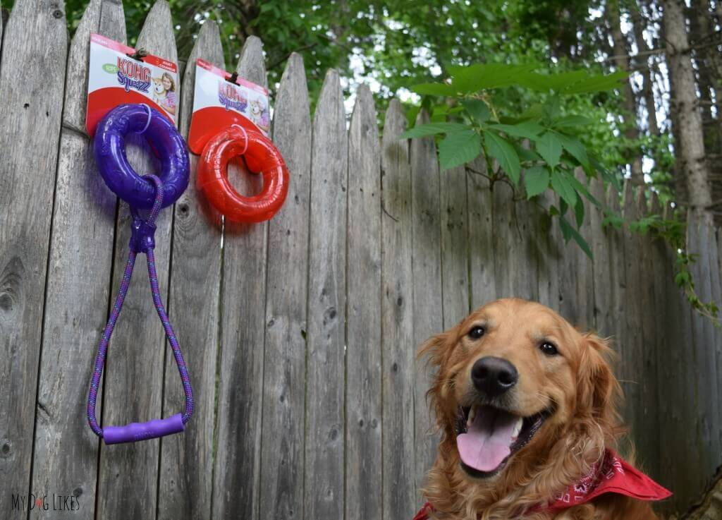 The Kong Squeezz toys are some of our favorite outdoor dog toys. We love the way they roll and bounce!