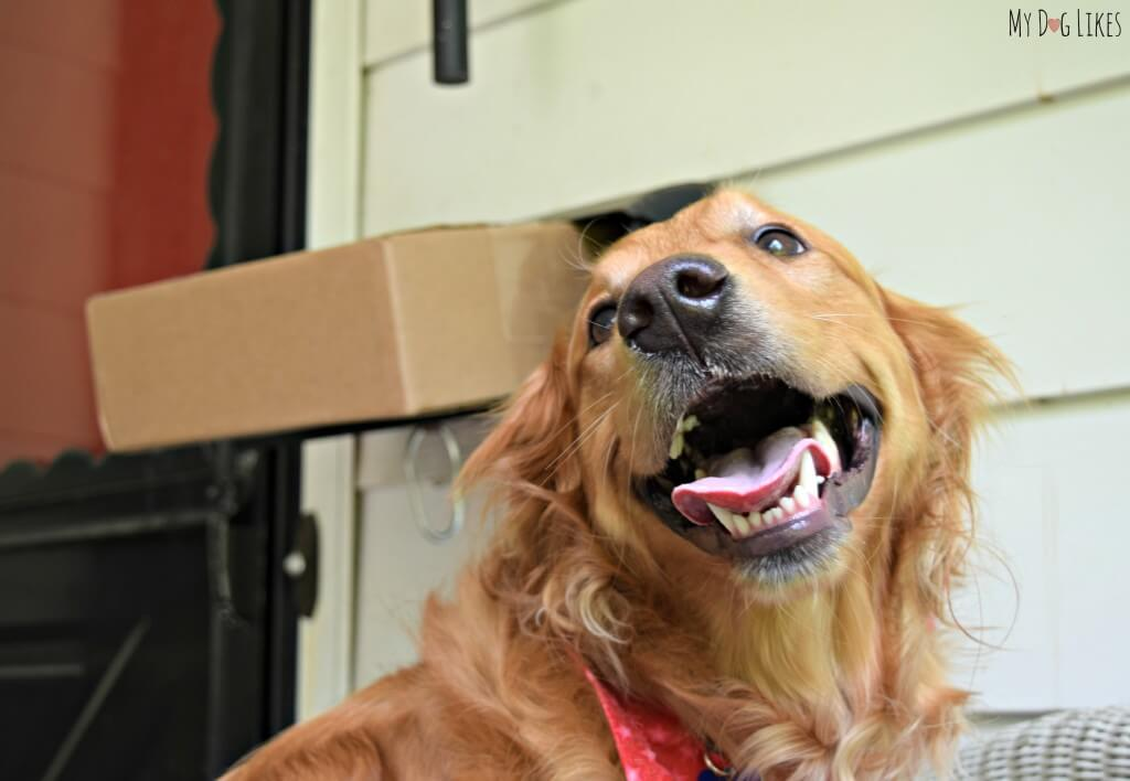 Charlie is ecstatic to see that a package has arrived for him!
