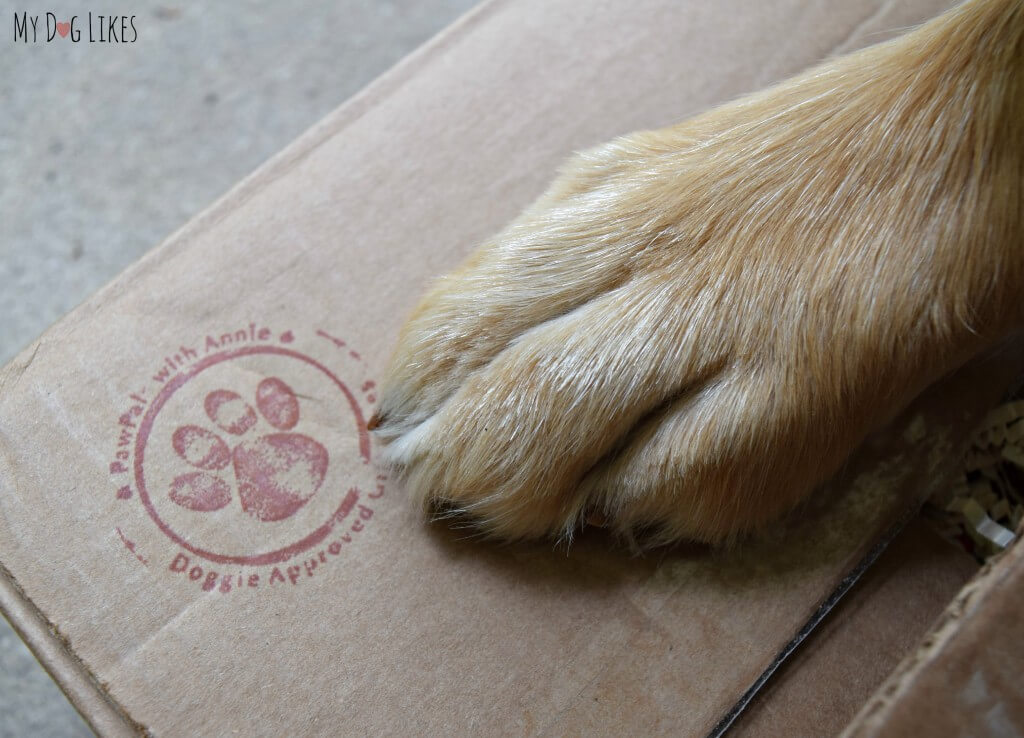 Charlie about to open up a package from his Paw Pal Annie!