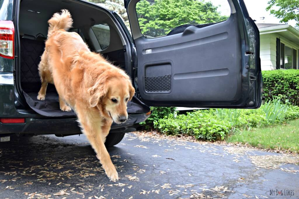 The Toyota Rav4 is an excellent option for dog owners. The low tailgate makes it easy to get in and out of and the cargo area is very spacious and comfortable.