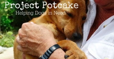 Read about the important work Dr. Harvey's is doing to help dogs in need with their Project Potcake initiative!