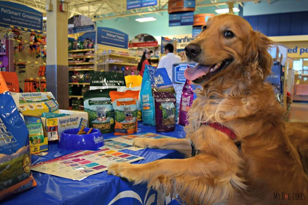 Charlie learning more about Natural Balance's high quality dog food and treats!