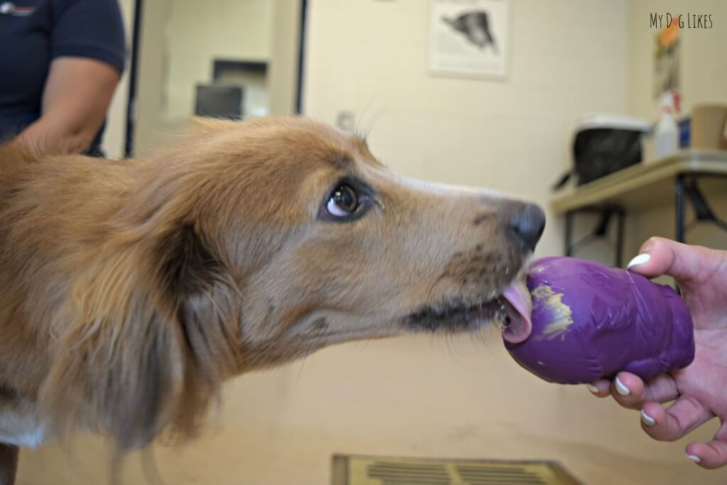 Busy Buddy Dog Toys can be stuffed with peanut butter or other treats to keep dogs interested and occupied