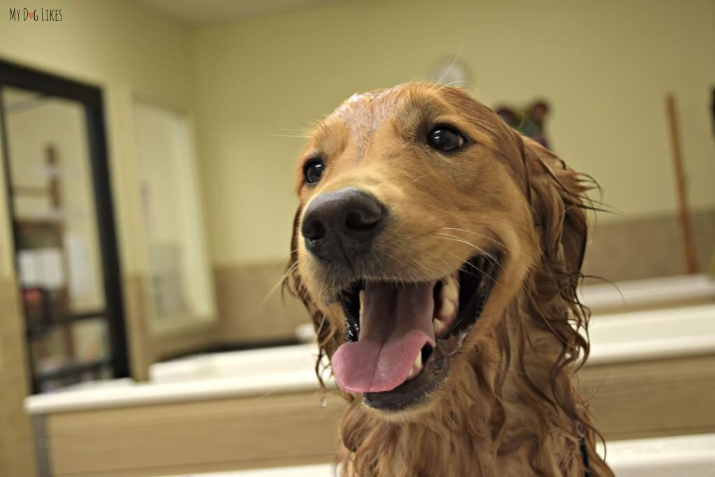 Charlie is one happy dog during his bath time!