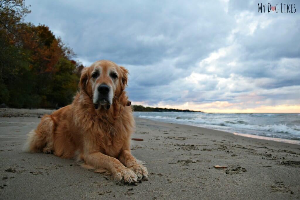Rochester NY dog beach at Durand Eastman Park