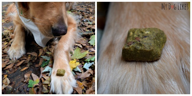 Wellness CocoChia all natural dog treats