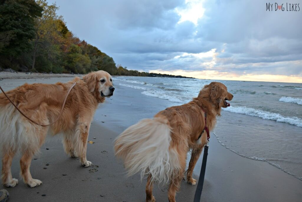 Dog beach at Durand Eastman Park on Lake Ontario