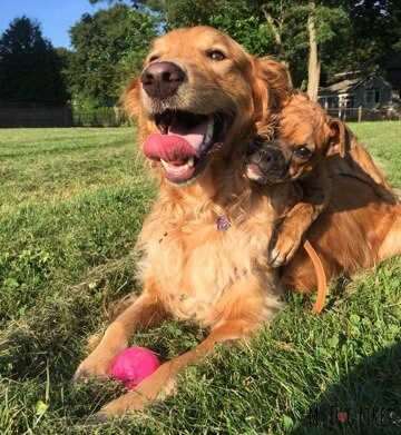 Charlie and puppy Lucy have become fast friends!
