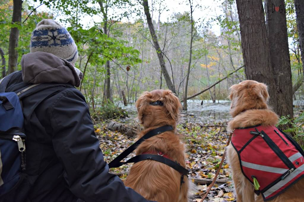 Exploring Durand Eastman Park with the dogs on a crisp Fall day