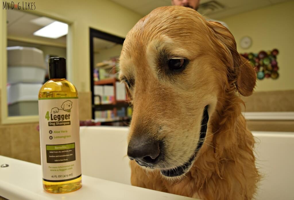 MyDogLikes reviews 4-Legger's Organic Dog Shampoo.