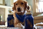 These Dog Treat Jars are a great gift idea for dog lovers!