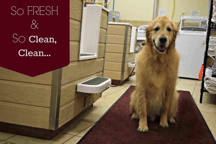 Harley feeling So Fresh So Clean after his bath with 4-Legger Dog Shampoo