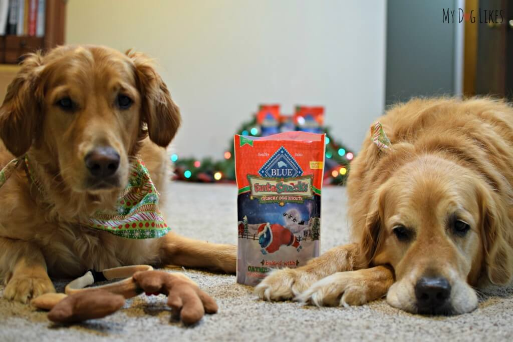 Waiting patiently for some BLUE Santa Snacks