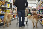 Shopping at Tractor Supply with Dogs
