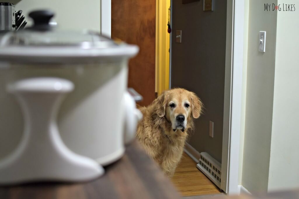 What's that I smell? Harley is anxious to dig in to his home prepped meal!