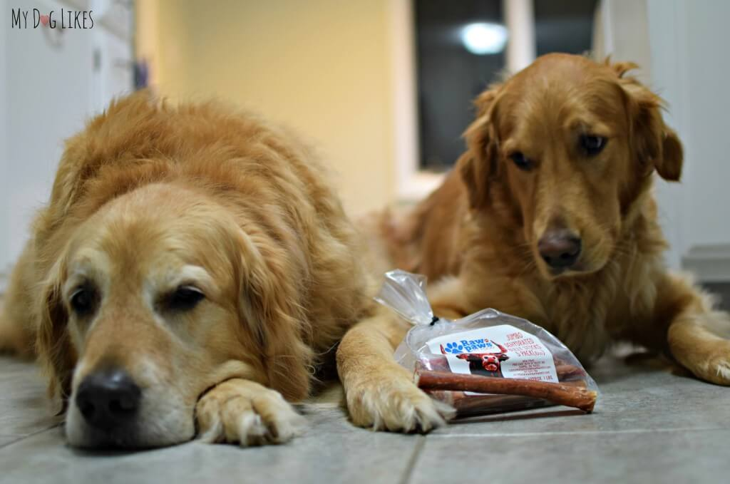 Harley and Charlie can't wait to get into their Raw Paws Bully Sticks!