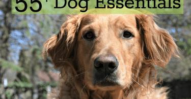 Getting a dog? Browse MyDogLikes Ultimate List of Dog Essentials!