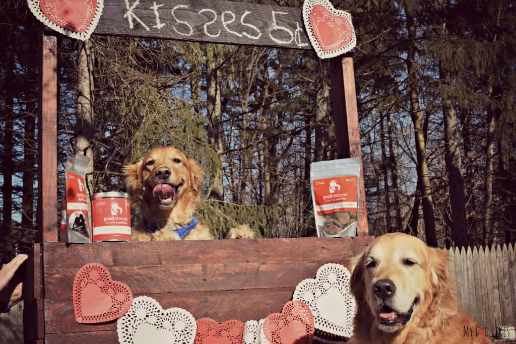 #MyDogValentine Dog Photo Contest
