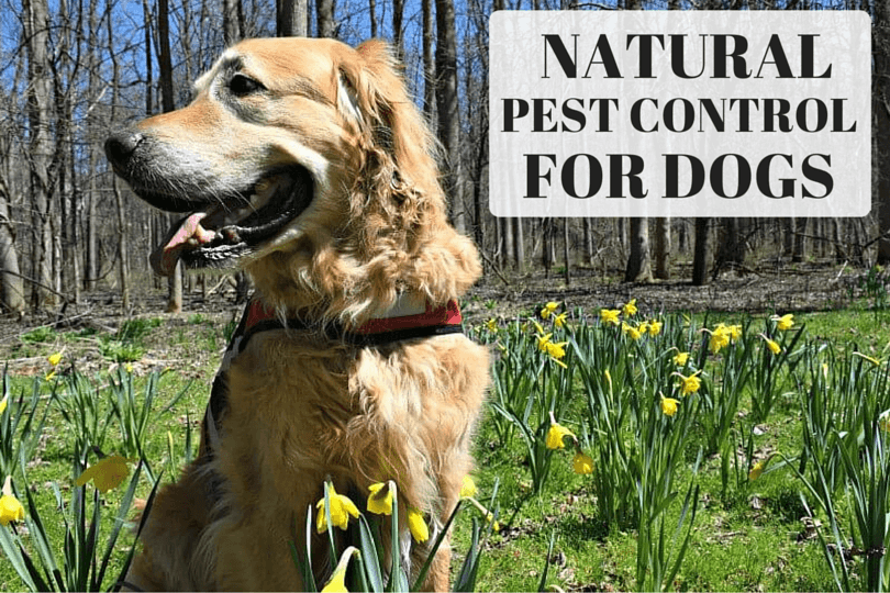 MyDogLikes breaks down the growing options for natural pest control