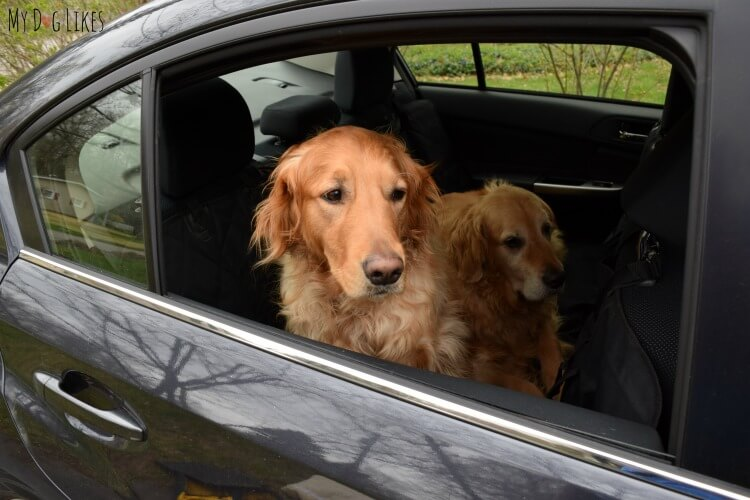 Harley and Charlie are ready to take a ride in style and comfort!