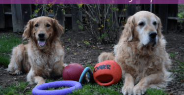 Outdoor Toys for Dogs