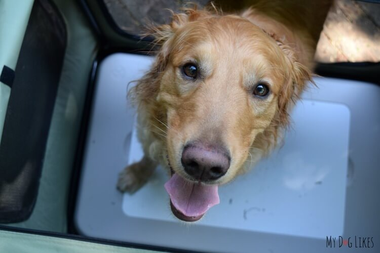 Check out our Chillspot Review to see why it beats other cooling pads for dogs.