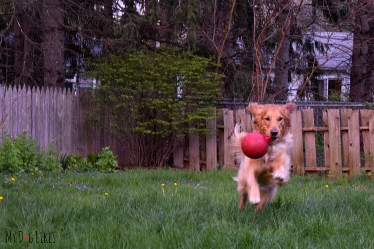 The Jolly Ball Tug-N-Toss is one of our favorite outdoor dog toys