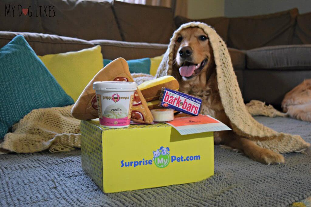 Movie night with our Surprise My Pet subscription box for dogs!