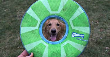 MyDogLikes breaks down the best frisbees for dogs