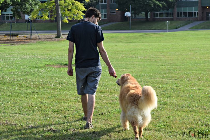 MyDogLikes breaks down our top 5 Tools to Train Loose Leash Walking