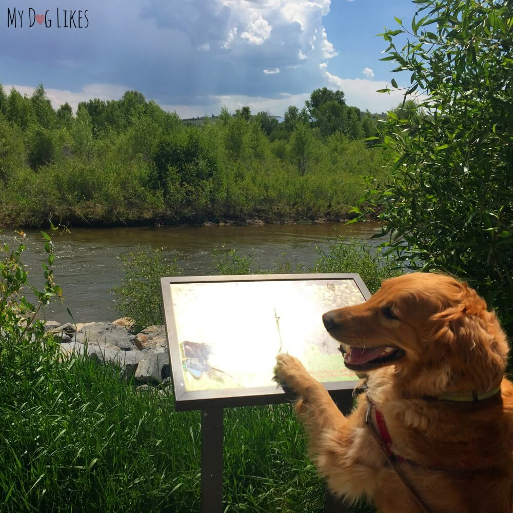 Charlie looking for Moose at Bear River State Park in Wyoming