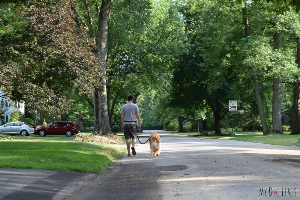 Demonstrating the Hands Free Dog Leash from MightyPaw. Perfect for active pet parents and avid runners!