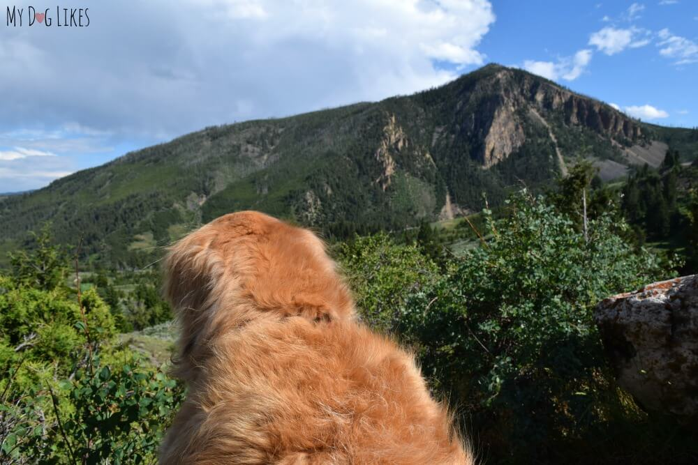 Harley looking out over Bunsen Peak south of Mammoth Hot Springs