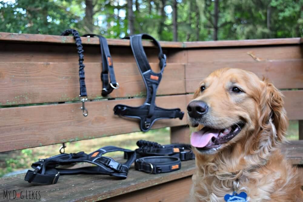MyDogLikes reviews Mighty Paw Dog Gear & Accessories
