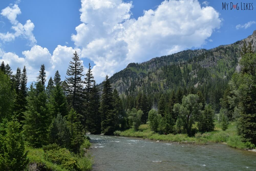 The view from the Squaw Creek Bridge off Grey's River Road