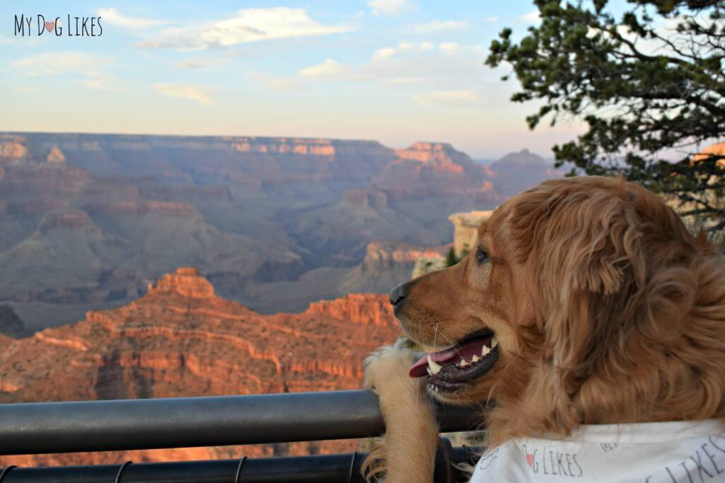 Charlie admiring the view at the Grand Canyon