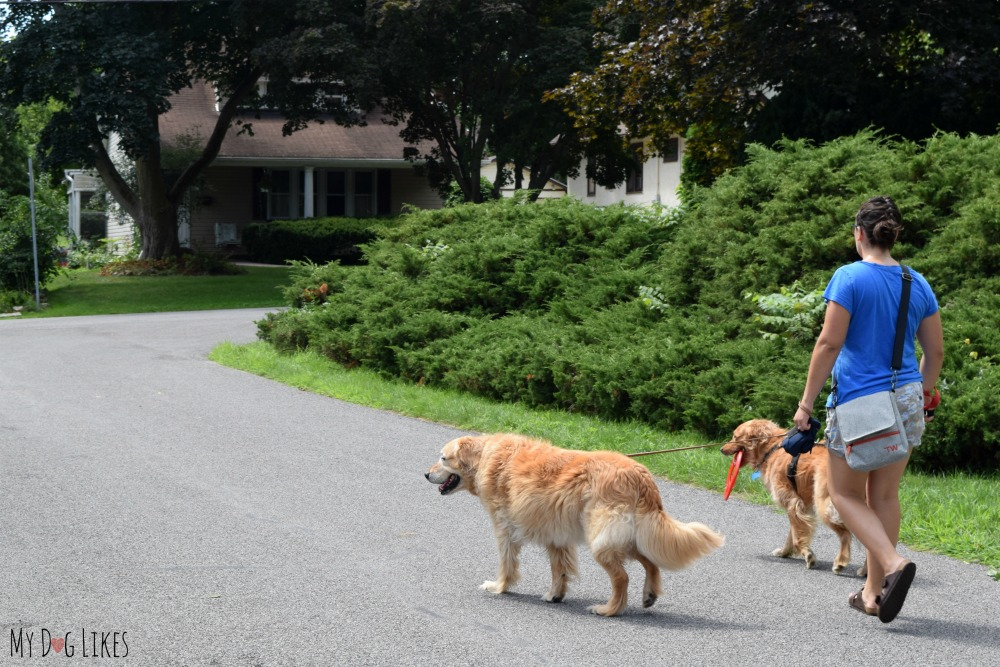 Travel Wags - Our new favorite bag for dog walking!