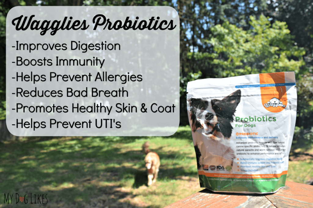 Taking a closer look at the benefits of probiotics for d.ogs