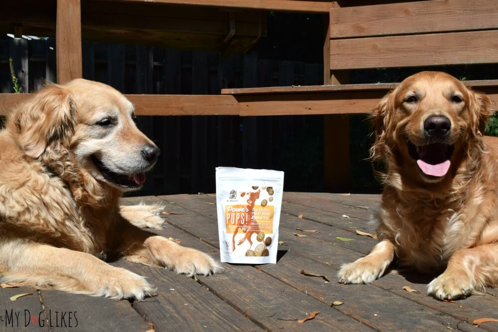 Harley and Charlie reviewing Dr. Harvey's new Tripe Dog Treats