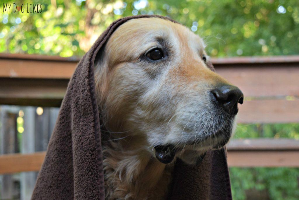towel-dry