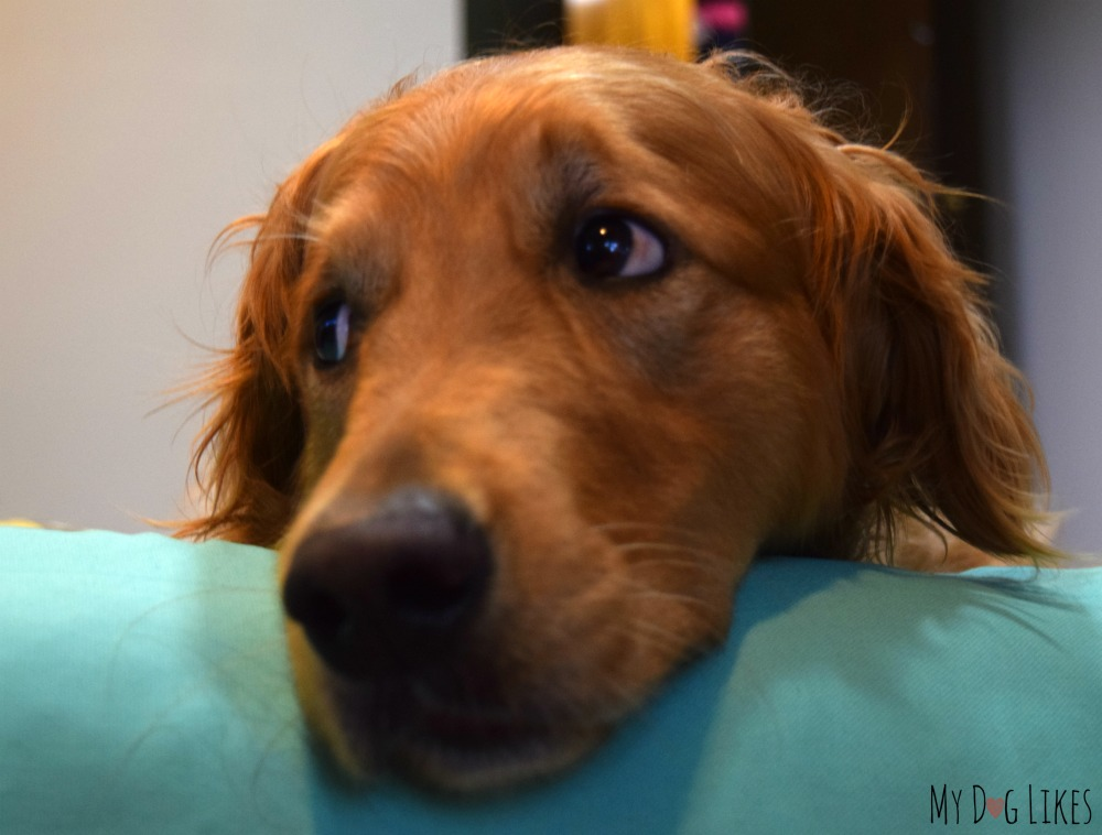 What to do when your dog is not feeling well