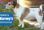 Learn more about the difference quality dog food can make in Nala's Dr. Harvey's Testimonial