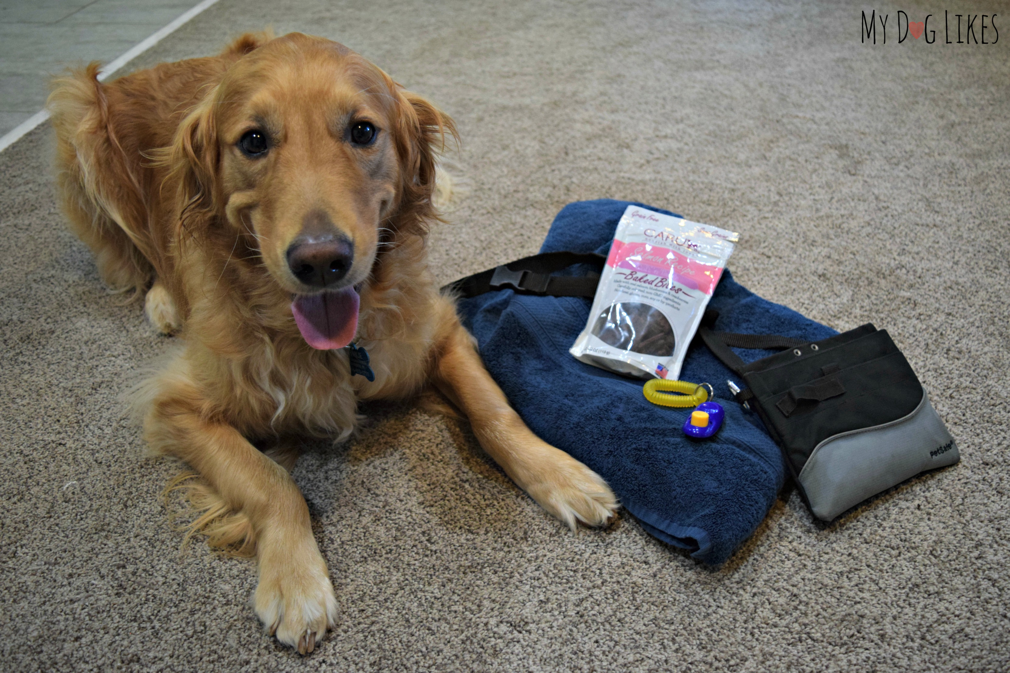 Gathering supplies to teach Charlie a new trick - treats, treat pouch, clicker and towel.