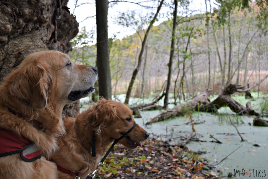 Enjoying a Fall hike in Western New York - does anything beat the colorful foliage and crisp air?