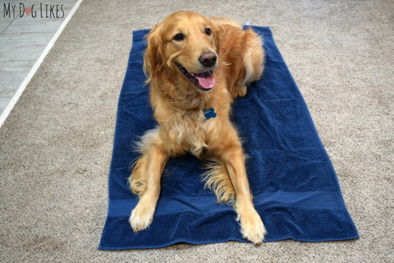 Learn more about teaching your dog the place command in our latest dog training article.