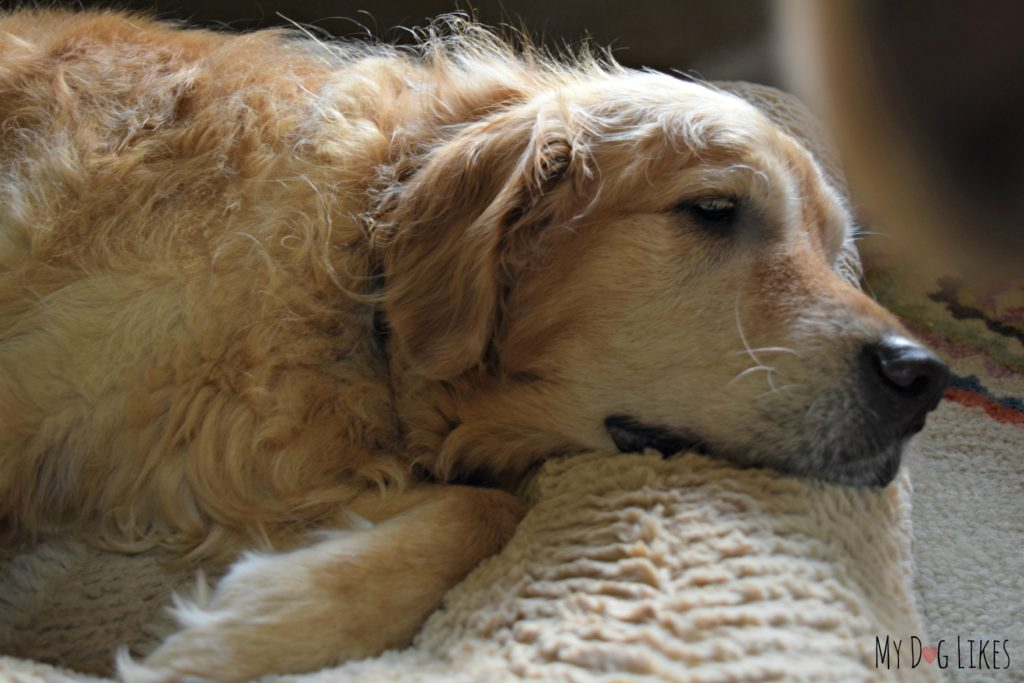 What to do when your dog has an upset stomach