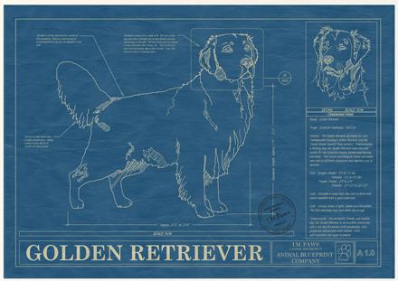 golden-retriever-blueprint