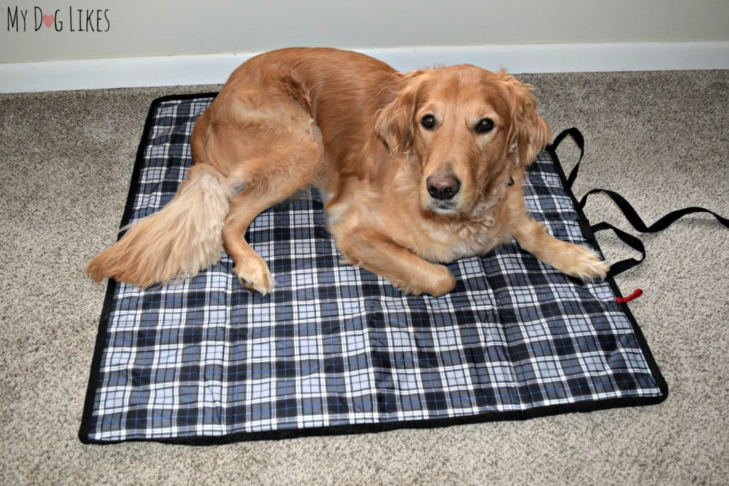 We practiced using our Griffs4Dogs mat at home before heading out with it